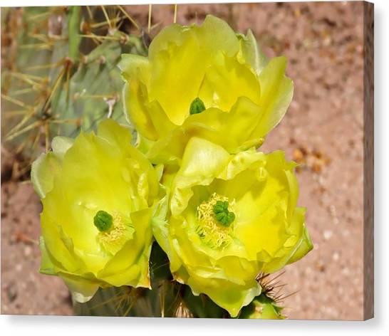 Prickly Pear Cactus Trio Bloom Canvas Print