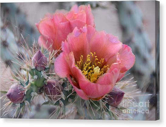 Botany Canvas Print - Prickly Pear Cactus With Pink Flowers by Jerry Horbert
