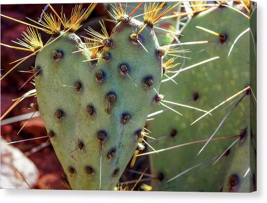 Canvas Print featuring the photograph Prickly Pear Heart 1 by Dawn Richards