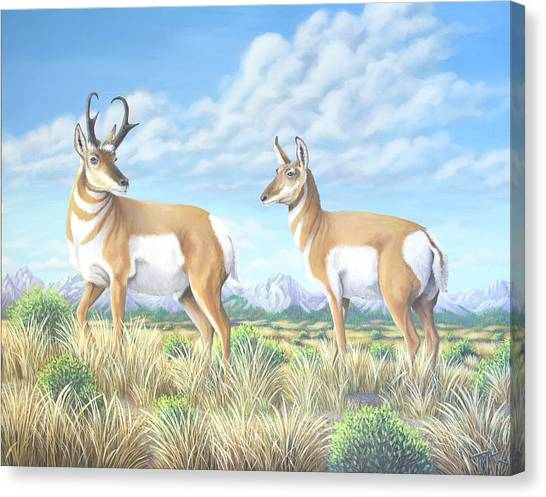 Pronghorn By The Tetons Canvas Print