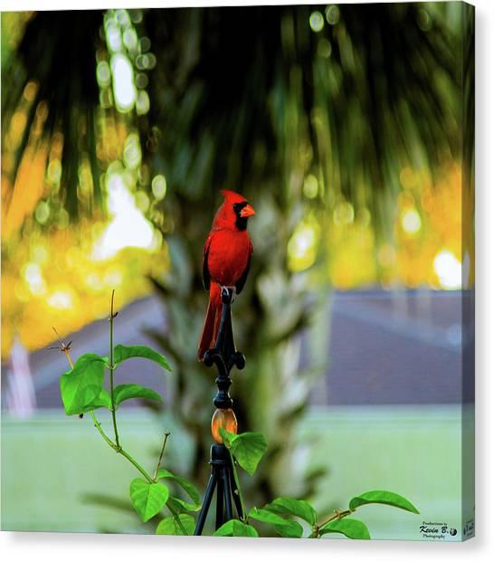 Proud Male Cardinal Canvas Print