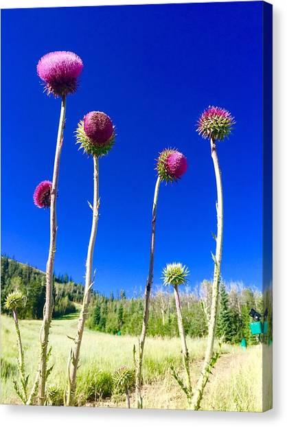 Proud Mountain Flowers Canvas Print