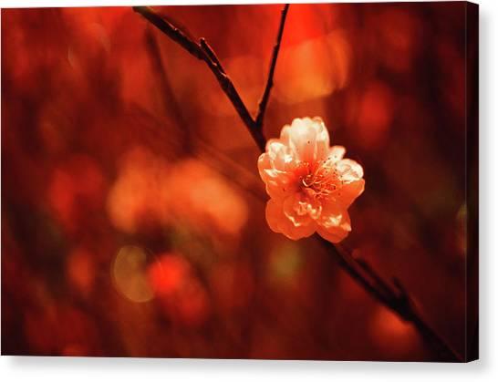 Chinese New Year Canvas Print - Prunus Mume by By Noircorner (jacqueline Kwok)
