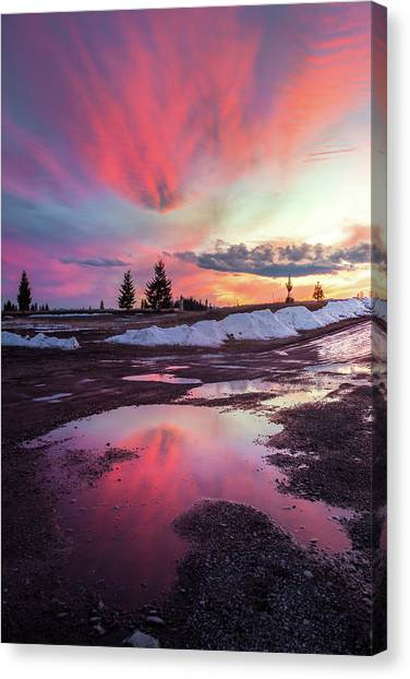 Puddle Reflection / Columbia Falls, Montana  Canvas Print