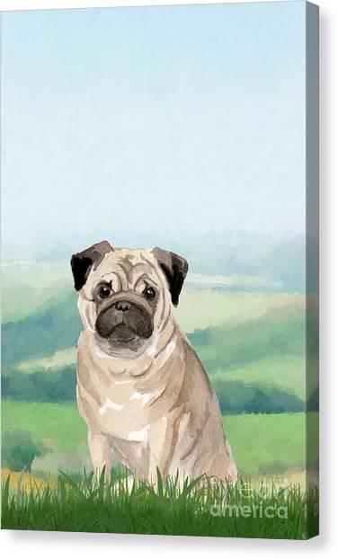 Purebred Canvas Print - Pug by John Edwards