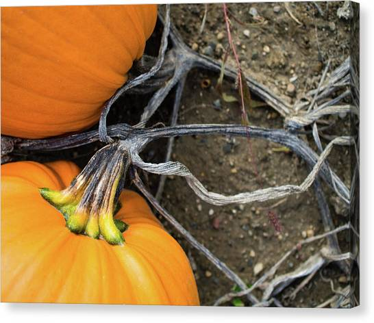 Canvas Print featuring the photograph Pumpkins Entwined Together by Whitney Leigh Carlson