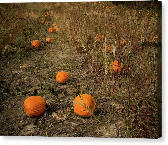 Pumpkins Lying In A Field Canvas Print