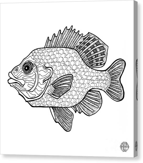 Pumpkinseed Fish Canvas Print