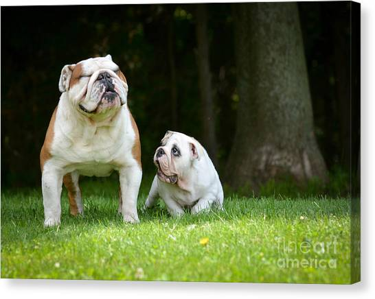 Purebred Canvas Print - Puppy And Adult Dog Playing Outside - by Willeecole Photography
