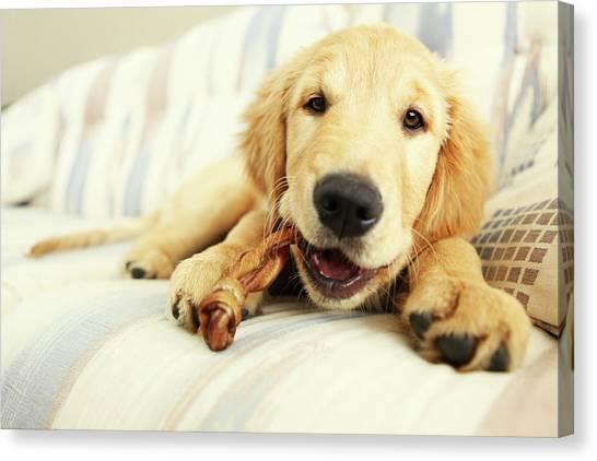 Puppy Chewing On Bone Canvas Print