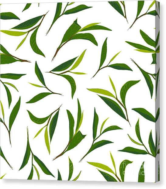 Ingredient Canvas Print - Pure Tea. Botanical Style Seamless by Irache