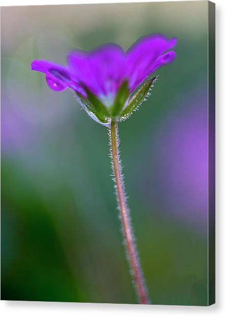 Canvas Print featuring the photograph Purple Flower by John Rodrigues