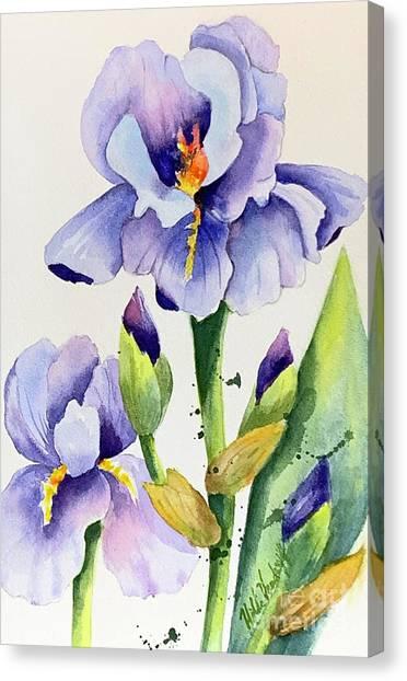 Purple Iris And Buds Canvas Print