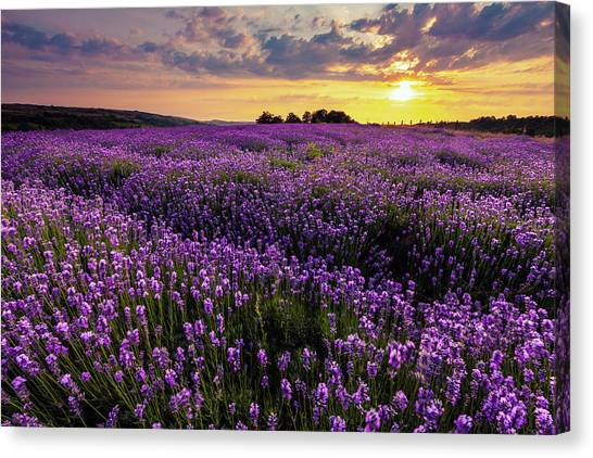 Purple Sea Canvas Print
