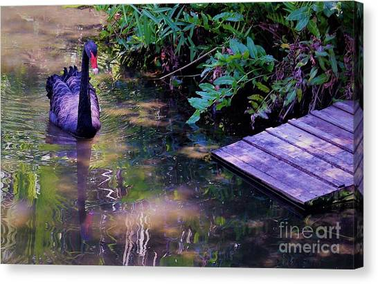 Canvas Print - Purple Swan by Mindy Newman