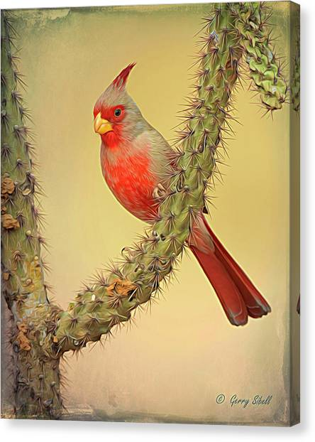 Pyrrhuloxia-filter Canvas Print