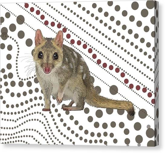 Canvas Print - Q Is For Quoll by Joan Stratton
