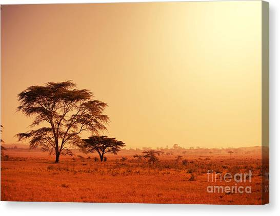 Southern Rock Canvas Print - Quiver Tree In Namibia, Africa by Galyna Andrushko