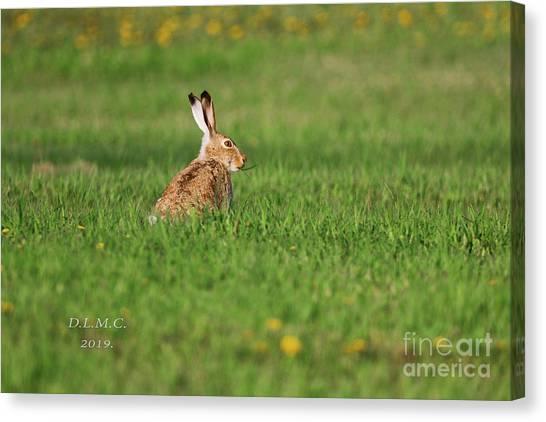 Rabbit Chews Canvas Print