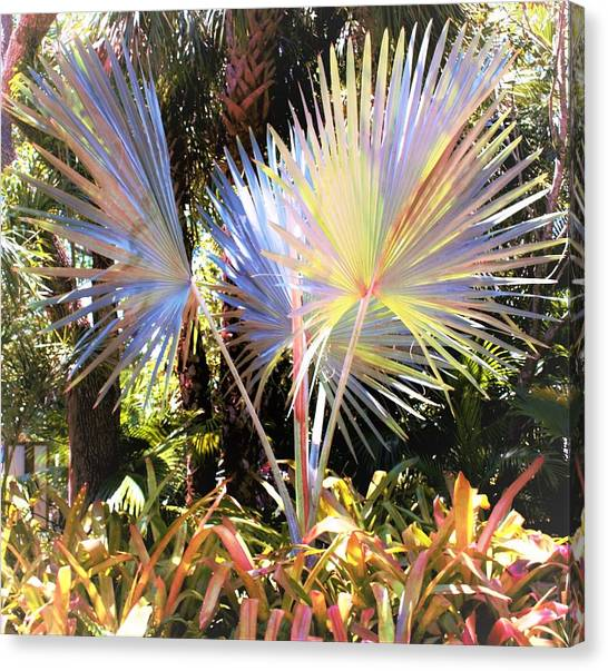 Canvas Print - Rainbow Palms by Mindy Newman
