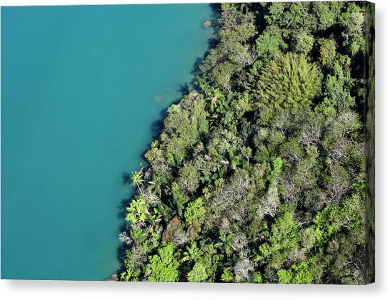 Rainforest Meeting Water Canvas Print by Fuse