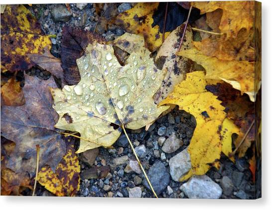 Canvas Print featuring the photograph Rainy Autumn Day by Mike Murdock