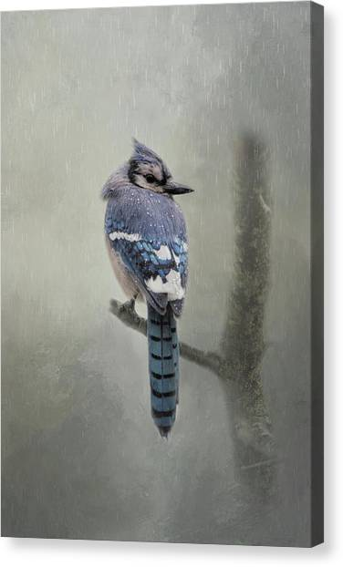 Rainy Day Blue Jay Canvas Print