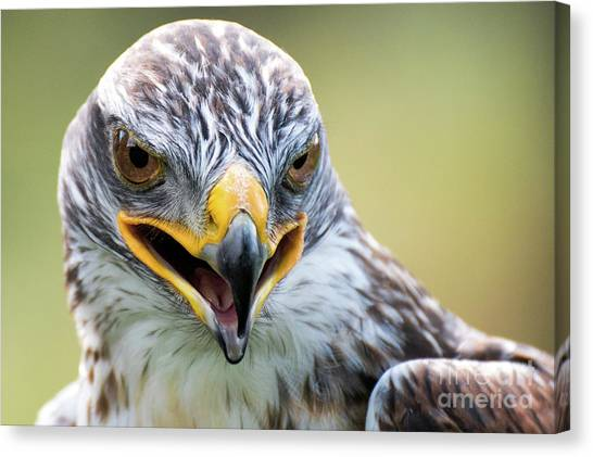 Raptor Power Canvas Print