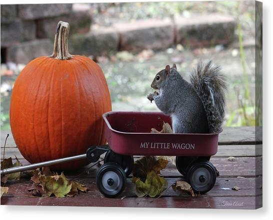 Ready To Ride My Little Red Wagon Canvas Print