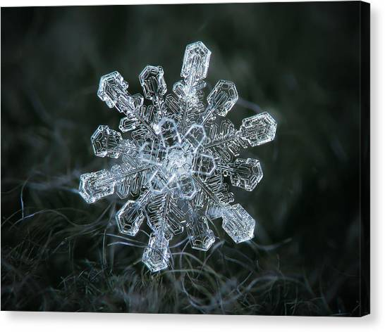Canvas Print featuring the photograph Real Snowflake - 04-feb-2018 - 1 by Alexey Kljatov