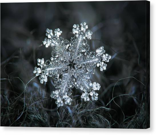 Canvas Print featuring the photograph Real Snowflake - 26-dec-2018 - 1 by Alexey Kljatov