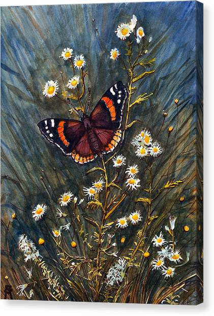 Red Admiral And Wild Aster Canvas Print
