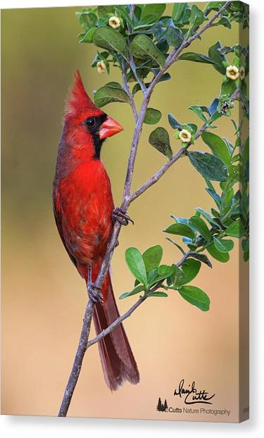 Red All Over Canvas Print