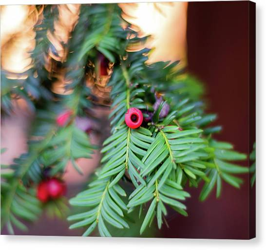 Canvas Print featuring the photograph Red Berry On Green by Scott Lyons