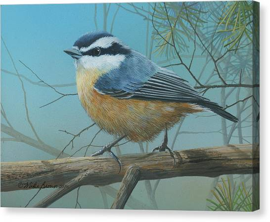 Red Brested Nuthatch Canvas Print