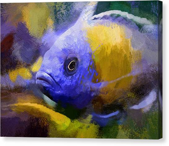 Red Fin Borleyi Cichlid Artwork Canvas Print