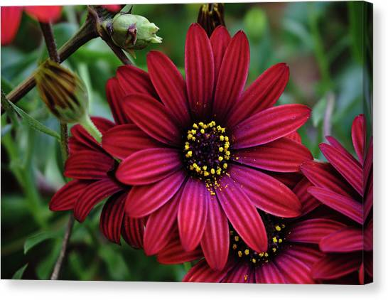 Red Flower - 19-5611 Canvas Print