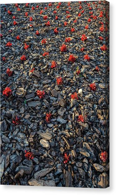 Red Flowers Over Stones Canvas Print