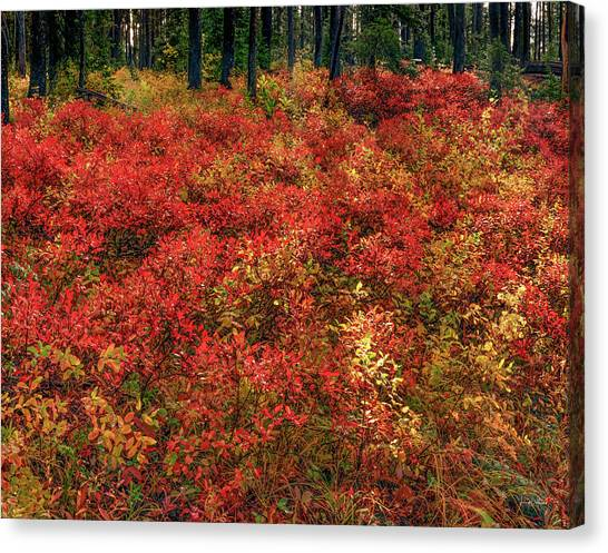Red Forest Light Canvas Print by Leland D Howard