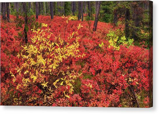 Red Forest Panoramic Canvas Print by Leland D Howard