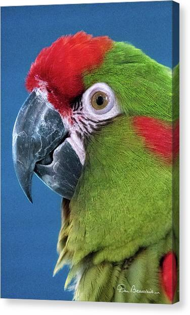 Red-fronted Macaw 3761 Canvas Print