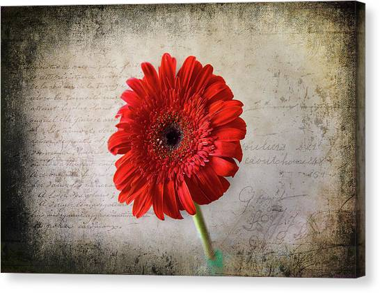 Canvas Print featuring the photograph Red Gerbera by Milena Ilieva
