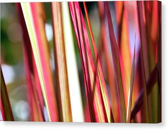 Blade Of Grass Canvas Print - Red Grass by Fotogaby