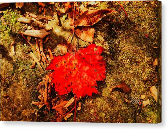 Red Leaf On Mossy Rock Canvas Print