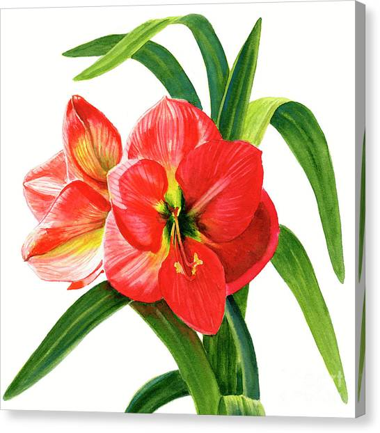 Amaryllis Canvas Print - Red Orange Amaryllis Square Design by Sharon Freeman