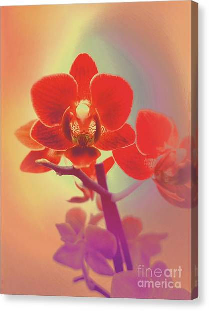 Canvas Print featuring the mixed media Red Orchid  by Rachel Hannah