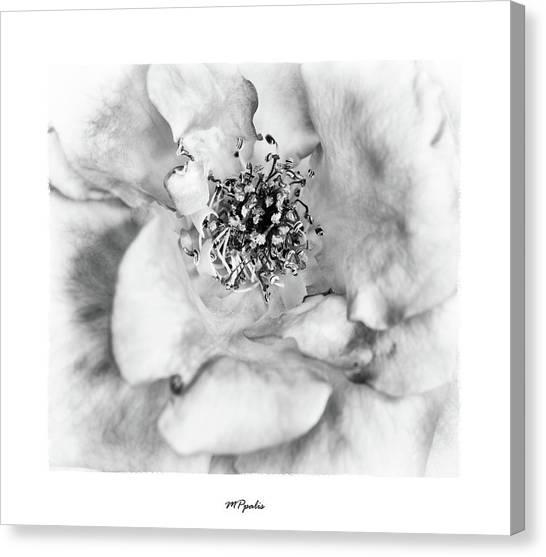 Red Rose Flower Details Canvas Print