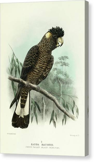 Cockatoos Canvas Print - Red-tailed Black Cockatoo by Gregory Mathews