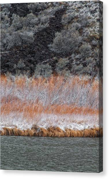 Red Willow Rio Canvas Print