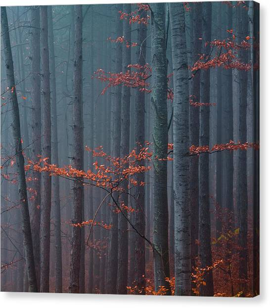 Red Wood Canvas Print